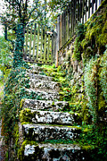 Salzkammergut Framed Prints - Mossy Stairs Framed Print by David Waldo
