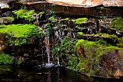 Ll Bean Prints - Mossy Waterfall Print by Tara Potts
