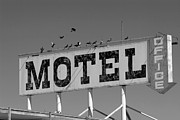 Motel Metal Prints - Motel for the Birds Metal Print by Peter Tellone