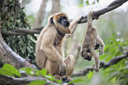 JPLDesigns - Mother and Baby Howler...