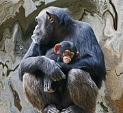 Chimpanzee Digital Art Framed Prints - Mother and Child Chimpanzee 2 Framed Print by Daniele Smith