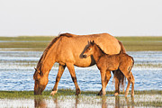 Rachel Carson Posters - Mother and Foal Poster by Bob Decker