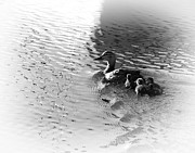 Joseph Duba Metal Prints - Mother Duck with Babies Canandaigua Lake Metal Print by Joseph Duba