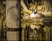 LeeAnn McLaneGoetz McLaneGoetzStudioLLCcom - Mother Goose