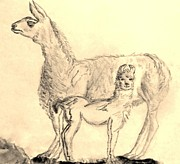 Mountain Goat Drawings - Mother Llama and Baby by Eloise Schneider