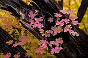 Fall Colors Photos - Mother Natures Beauty  by Saija  Lehtonen