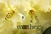 Jean_okeeffe Photos - Mothers Day - Greeting Cards by Jean OKeeffe by Jean OKeeffe