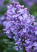 Diana Haronis Posters - Mothers Day Lilacs Poster by Diana Haronis
