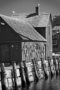 Schooner Framed Prints - Motif Number One BW Black and White Rockport Lobster Shack Maritime Framed Print by Jon Holiday