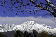 Snow Cap Photos - Mount Baldy by Camille Lopez