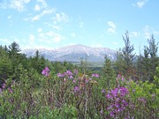 Baxter Peak Prints - Mount Katahdin and Wild Flowers Print by Joseph Marquis