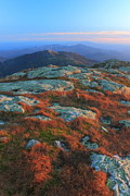 Alpine Zone Posters - Mount Mansfield Alpine Zone in Autumn Poster by John Burk