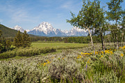 Wildflower Photos Posters - Mount Moran View Poster by Brian Harig