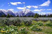 Wildflower Photos Posters - Mount Moran Wildflowers Poster by Brian Harig
