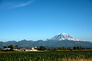 Cornfield Photos - Mount Rainier and Cornfield by Stacey Lynn Payne