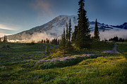 Mount Rainier Framed Prints - Mount Rainier Evening Fog Framed Print by Mike Reid