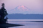 Featured On Fineart America - Mount Rainier Evening by Sean Griffin