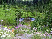Meadows Mixed Media - Mount Rainier National Park - Natural Paradise by Photography Moments - Sandi