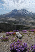 Helen Originals - Mount Saint Helens in Summer by Robert  Moss