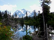 Karen Molenaar Terrell - Mount Shuksan Reflection