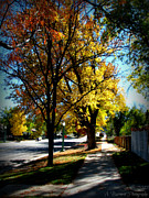 Prescott Photos - Mount Vernon Autumn Trees by Aaron Burrows