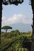Vineyard Landscape Framed Prints - Mount Vesuvius Framed Print by Adam Romanowicz