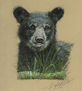Terry Kirkland Cook - Mountain Bear Cub