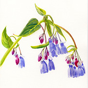 Blue Flowers Painting Posters - Mountain Bluebells Poster by Sharon Freeman