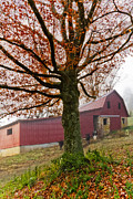 Tennessee Barn Posters - Mountain Dairy Farm Poster by Debra and Dave Vanderlaan