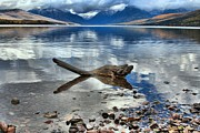Lake Mcdonald Prints - Mountain Drift Log Print by Adam Jewell