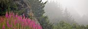 Mountain Fog Print by Chuck Flewelling
