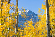 Featured Art - Mountain in Fall II by Quincy Dein