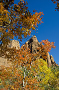 Zion National Park Photos - Mountain Landscape at Zion by Jon Berghoff