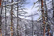 Snowy Tree Framed Prints - Mountain landscape Framed Print by Elena Elisseeva