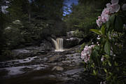 Mountain Laurel And Falls On Small Stream Print by Dan Friend