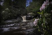 Dan Friend - Mountain laurel and falls on small stream