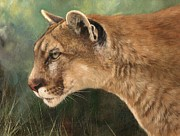 David Stribbling - Mountain Lion
