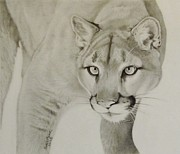 Karen Marvel - Mountain Lion