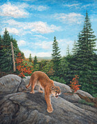 Marshall Bannister - Mountain Lion