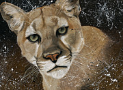 Lion Pastels - Mountain Lion by Renee Delage