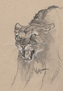 Callie Smith - Mountain Lion Sketch