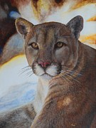 Bush Wildlife Paintings - Mountain Lyin - Watercolor by GD Rankin