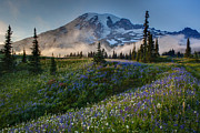 Northwest Art - Mountain Meadow Serenity by Mike Reid