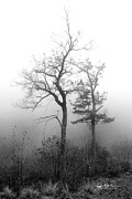 Asheville Photographs Prints - Mountain Mist Print by Jeff McJunkin