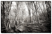 Black And White Mountain Prints Framed Prints - Mountain Path Framed Print by John Rizzuto
