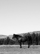 St Barbara Framed Prints - Mountain Quarterhorse Framed Print by Barbara St Jean