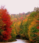 Foliage In White Mountains Posters - Mountain Road In Fall Poster by Eunice Miller