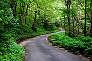 Green Foliage Prints - Mountain Road Print by Robert Harmon