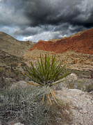 Alan Socolik - Mountain Storm with Yucca