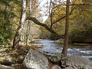 Gatlinburg Tennessee Prints - Mountain Stream 1 Print by Steven Overton